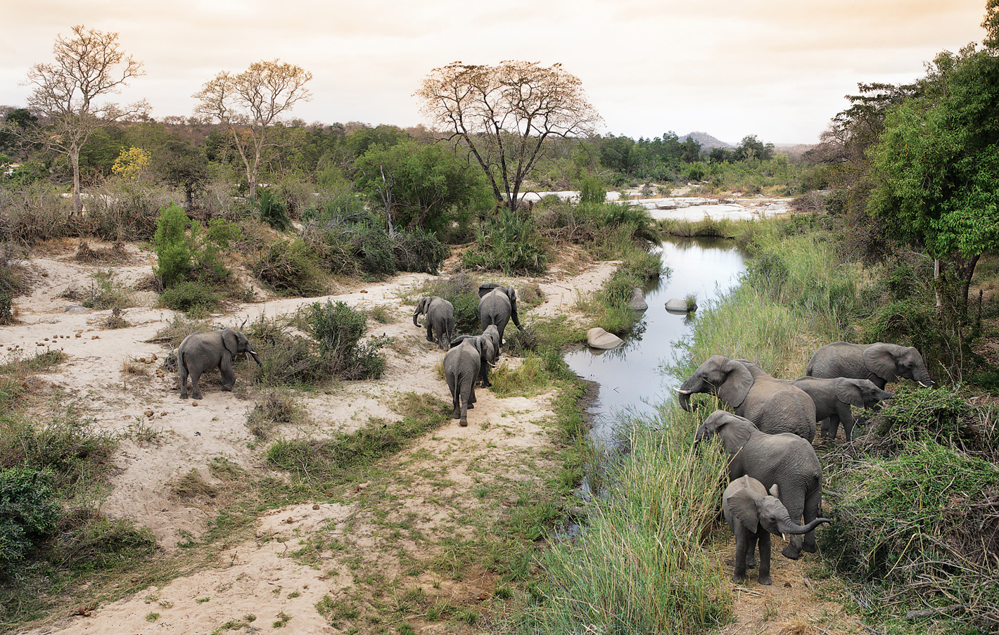 Elephants in Londolozi