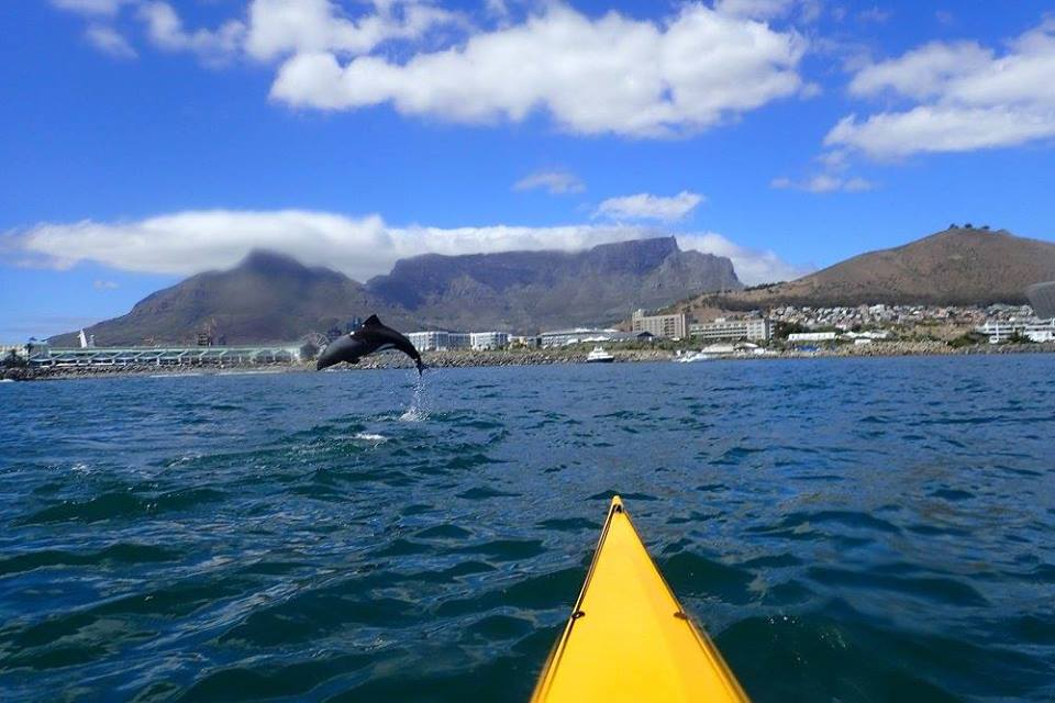 jumping dolphin in Cape Town bay with Table Mountain