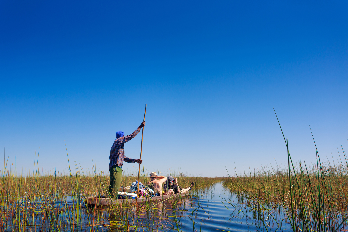 Mokoro trip through reeds in the Okavango Delta