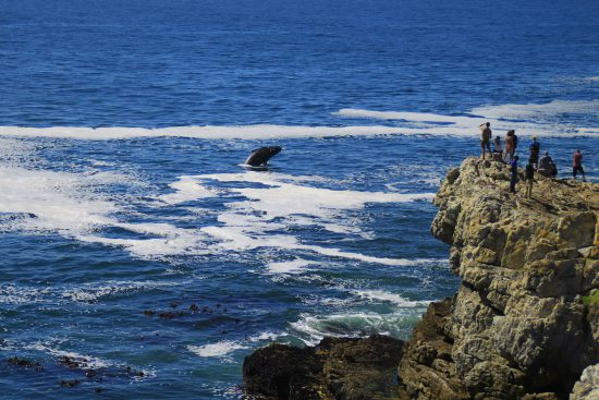 Man watching whale jumping from cliff
