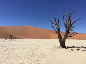acacia noir desert de sel et argile de sossuvlei entouré de dunes sable namibie