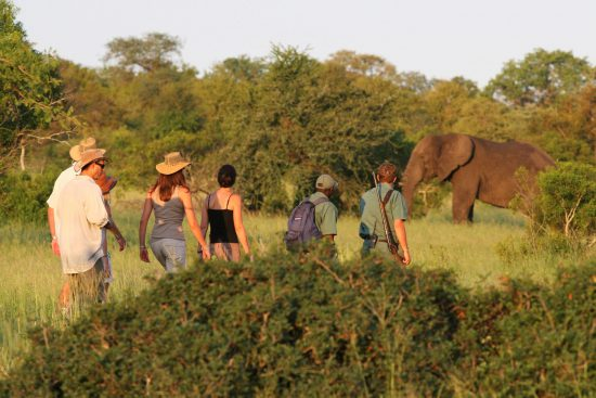 Walking safari at Rhino Plains Camp with elephant in the background