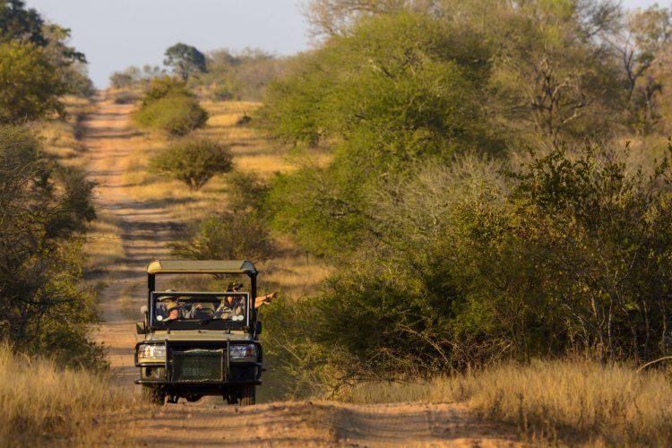 Safari im Krüger