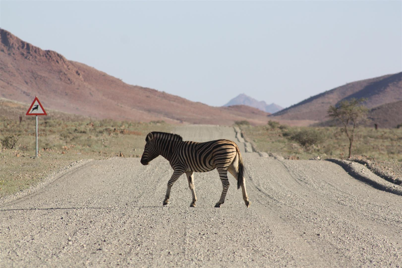 zèbre traversant une route au namibrand namibie