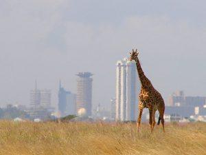 Parc National de Nairobi, l'une des grandes villes d'Afrique à découvrir