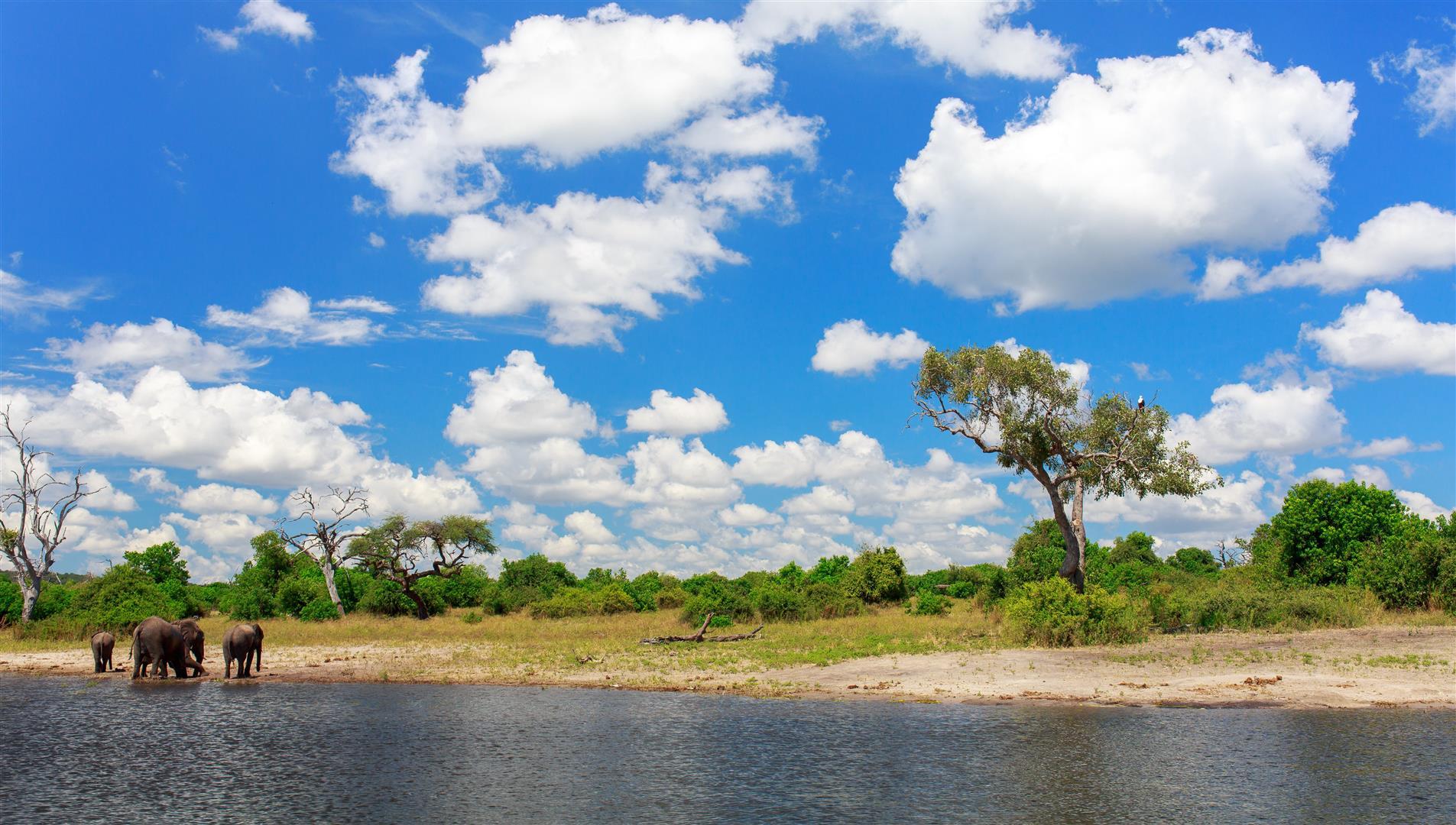 Un groupe d'éléphants se rafraîchissant au bord de la rivière Chobe en Namibie
