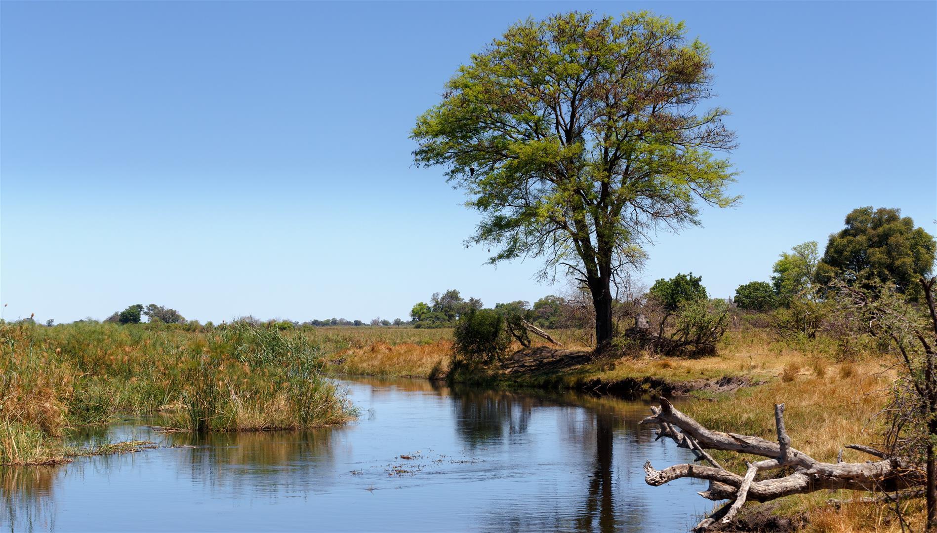 Paysages et verdure bordant la rivière à Caprivi en Namibie