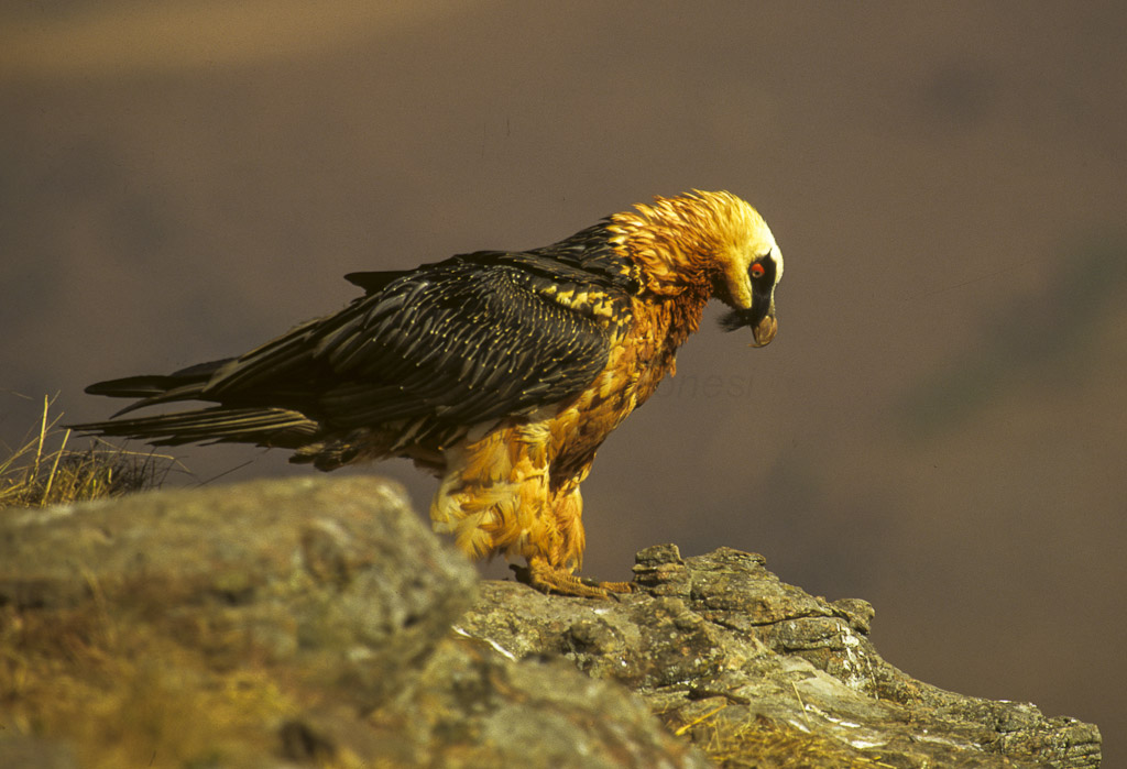 The 10 Most Fascinating Birds In Southern Africa