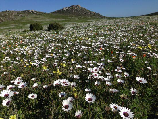 flowers on west coast flower season
