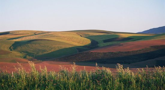The soft, colourful fields of Overberg