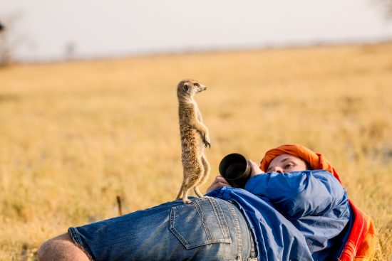 A meerkat stands on the photographer