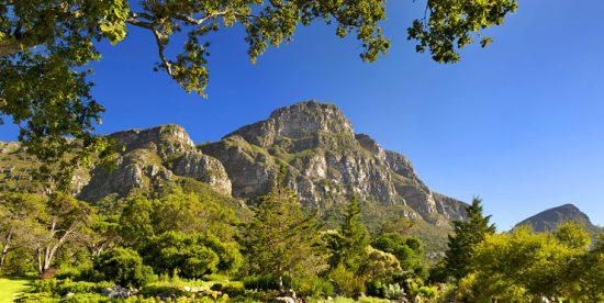 Jardin de Kirstenbosch dans les montagnes du Cap.