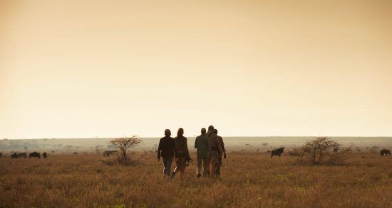 Explore this signature Southern Africa Safari today