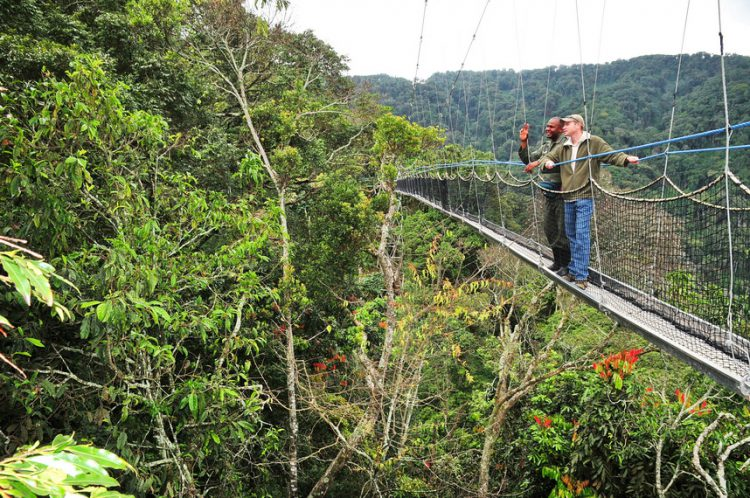 Canopy walk in Nyungwe Forest National Park in Rwanda