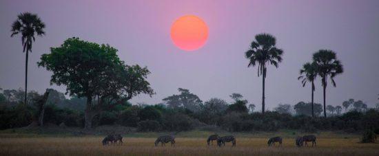 Botswana gilt als das letzte wahrhaftig wilde Land der Welt – keine Spur von Warteschlangen und Verkehrslärm.