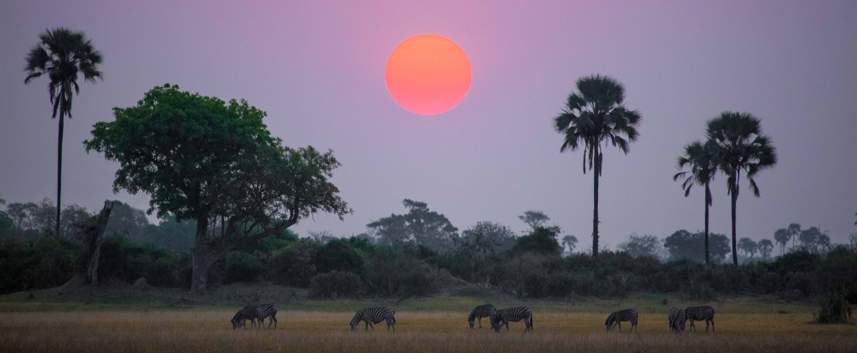 botswana evening sun and zebras