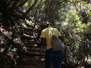 Skeleton Gorge via Kirstenbosch Garden