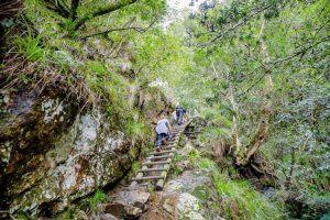 Randonnées à Cape TOwn : Skeleton Gorge