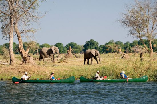 Canoe down Zambezi past elephants