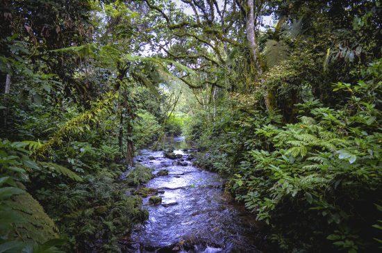 A creek through dense jungle
