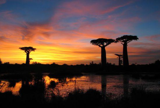Atardecer entre los milenarios baobabs de Madagascar