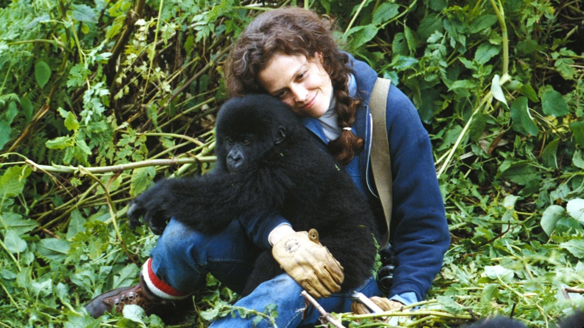 Films-gorillas-in-the-mist