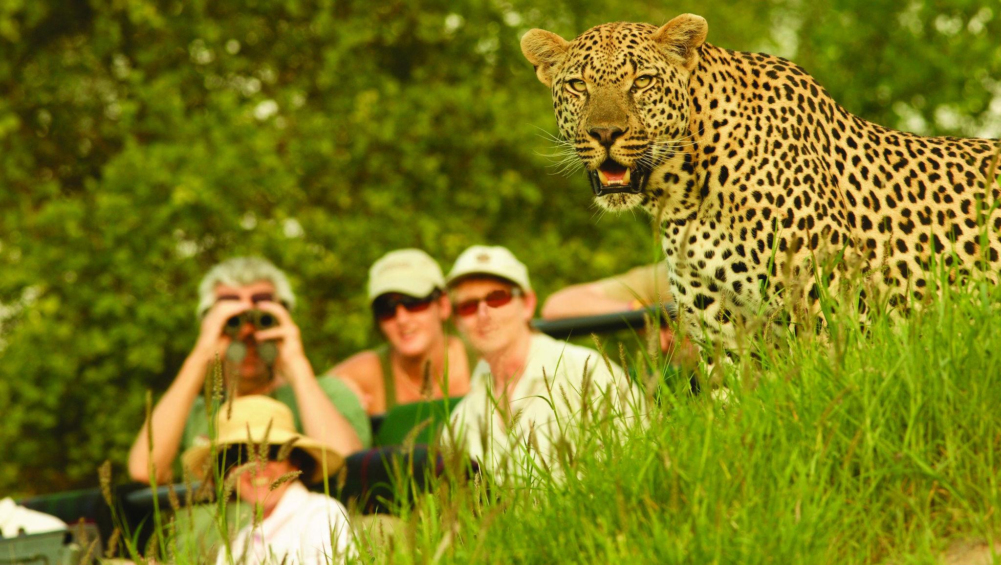 ¿Qué es un safari? Este es el ejemplo perfecto