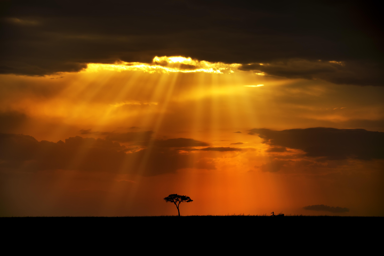 tree silhouette sun through clouds