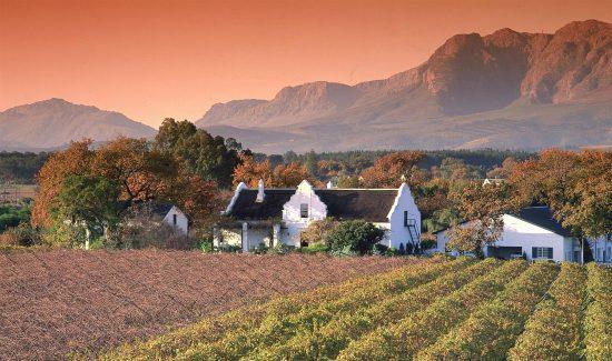 Vineyards in Paarl , Western Cape