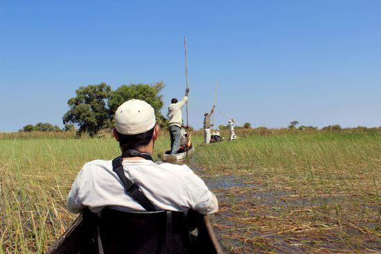 Line of mokoros in Okavango Delta