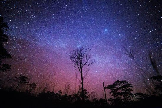 Silhouette of trees with stars lighting up the night sky
