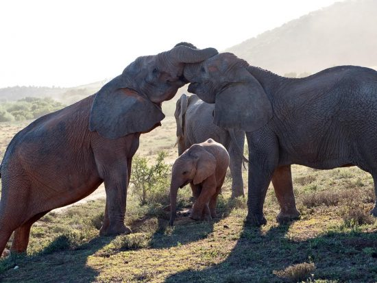 Elephant family seen during a game drive.