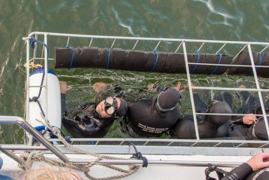 Mergulho com tubarões em gaiola
