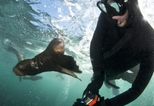 snorkeling with seals