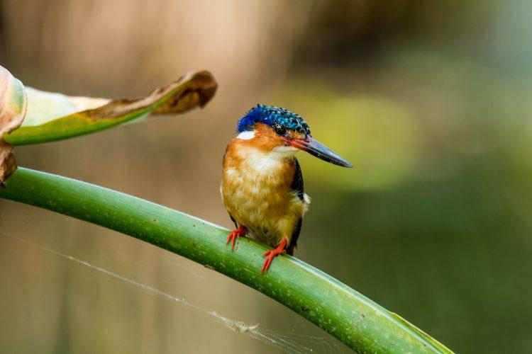 Ein vogel auf einer grünen Pflanze