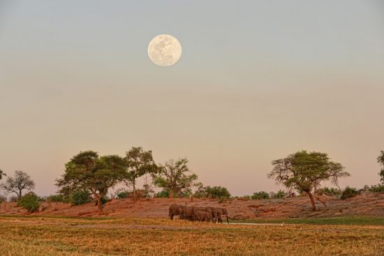 Elephants in water below full moon