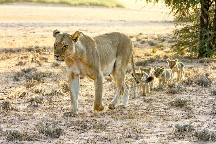 Foto von Mike Walsh aus Südafrika.