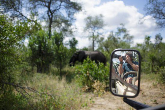 Elefante é fotografado durante safári na África