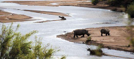 Rhino and calf at Kruger National Park