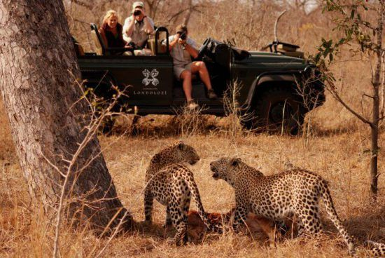 Leopards spotted on safari