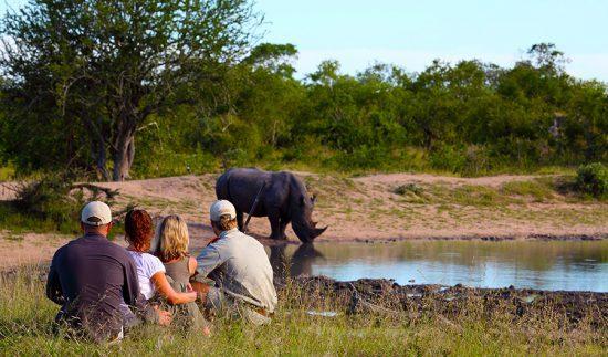 Rinoceronte é observado de perto por viajantes e guia durante safári a pé na Reserva Malamala