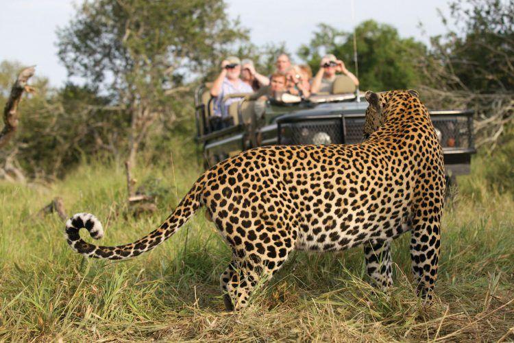 Safari en la Reserva Privada de Animales MalaMala