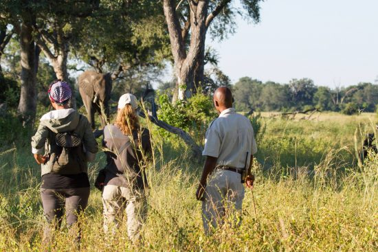walking safari camp okavango