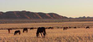 Namib_desert_feral_horses-namibia