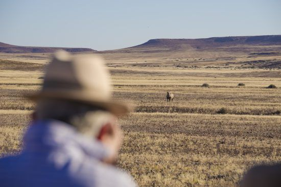 Spotting a desert-adapted rhino