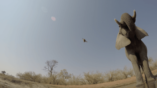 A footage shot from the GoPro of an elephant (and a bug)