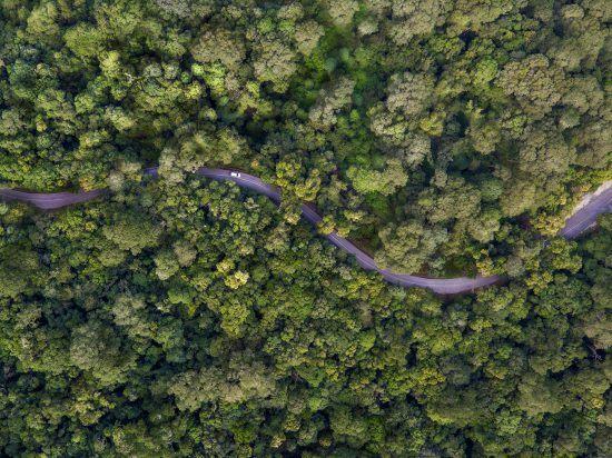 Ein Teil der Garden Route, die sich durch einen grünen Wald schlängelt aus der Vogelperspektive