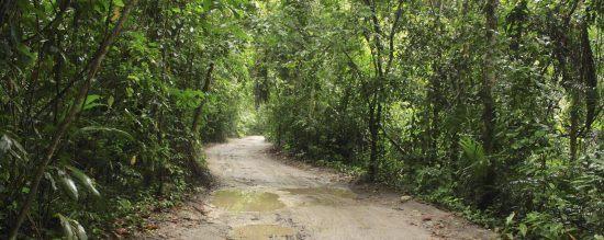 trees on pemba island zanzibar