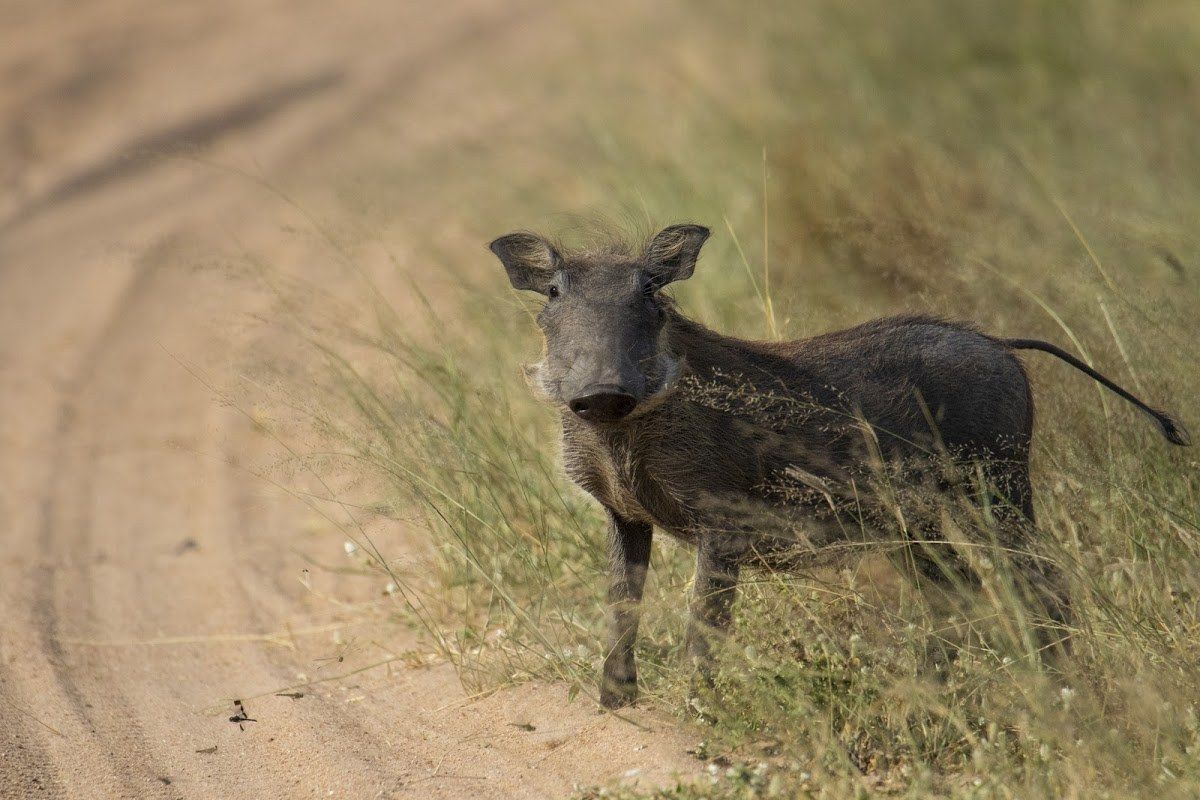 Do You Know What Animals Make Up The Ugly 5? | Rhino Africa Blog
