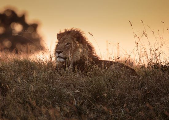Male lying in the grass as the sun sets behind him